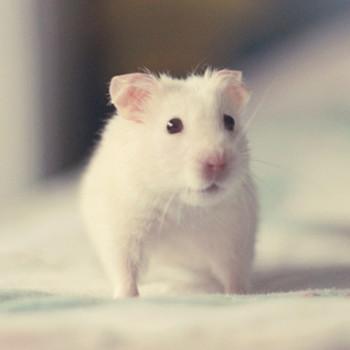 家里进老鼠是什么预兆
