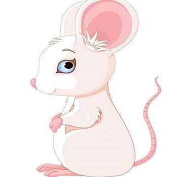 屬鼠的人2020年運程