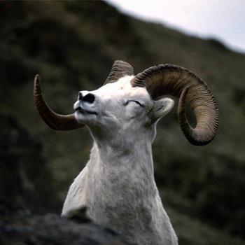 属羊的人2020年运程