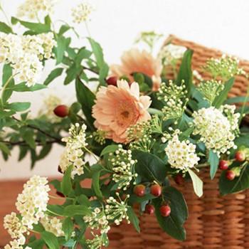 臥室擺放花草的風水知識