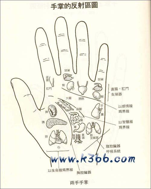 手掌各部位代表什么内脏