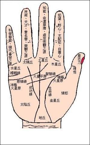 从手相命理来分析恋母情结八字的主要特征-手相图解