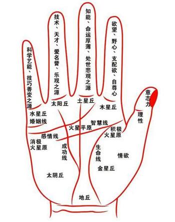 怎么看手纹-手相图解-华易网