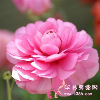<ahref=/xingzuo/baiyang/ target=_blank class=infotextkey>白羊座</a>男生最爱的女人是什么类型