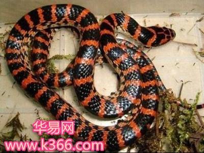 梦见各种颜色的蛇