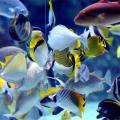 夢見水生物