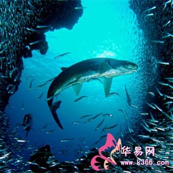 壁纸 动物 海底 海底世界 海洋馆 水族馆 鱼 鱼类 桌面 350_350