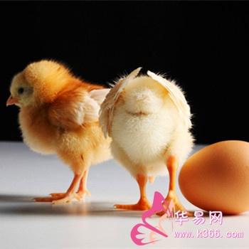 梦见公鸡母鸡是什么意思