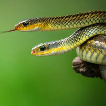 梦见床头有许多蛇