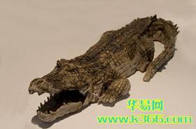 孕婦夢見鱷魚