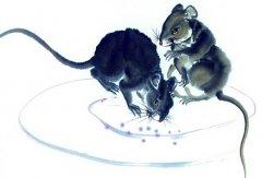 1996年属鼠的人2019年运势大全及破解