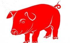属猪人2020年运势——四大运势