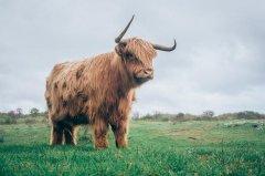 1997年属牛的人2020年运势及运程大全解析