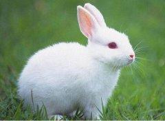 1999年属兔的人2020年运势及运程大全解析