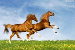 2002年属马的人2020年运势及运程大全解析