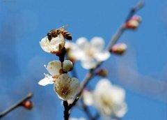 立春的十大禁忌,立春不能做什么,立春有何忌諱?