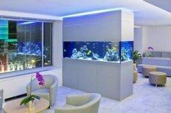 办公室养什么金鱼会旺财?办公室装修的风水讲究你知道吗?