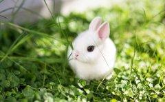 癸卯年卯时属兔命运怎么样?好不好?