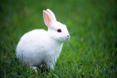 男属兔生在亥时好不好?亥时是什么时辰?
