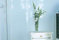 客廳財位放什么風水植物好?客廳財位怎么看?