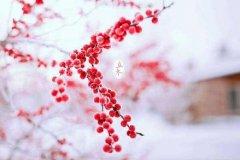 立冬前的節氣叫什么?立冬前一個節氣是霜降嗎?