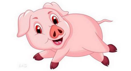 2020年属猪人