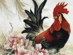 1969年出生的屬雞人2020年運勢好嗎?