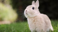 1987年出生的屬兔人忌諱什么顏色?