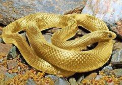 属蛇人2020年十一月搬家入宅的吉日盘点