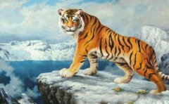 What is the life of a tiger born in the New Year, the fate of the first day of the first month of the tiger