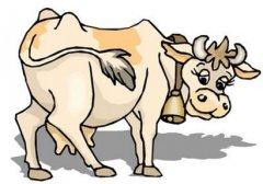 屬牛正月初一春節出生的人是什么命?屬牛春節出生好不好?