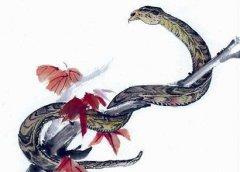 屬蛇正月初一春節出生的人是什么命?屬蛇春節出生好不好?