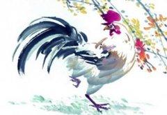 属鸡正月初一春节出生的人命运好不好,是什么命?