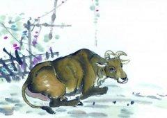 生肖属牛的人清明节出生好不好,属牛清明出生命运如何?
