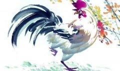 生肖属鸡的人清明节出生好不好,属鸡清明节出生命运如何?