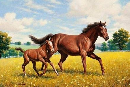 属马人2021年全年运势完整版 今年属马的财运和运气如何2021插图2