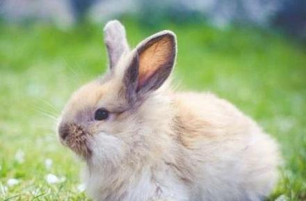 属兔人2021年全年运势完整版 今年属兔的财运和运气如何2021插图2