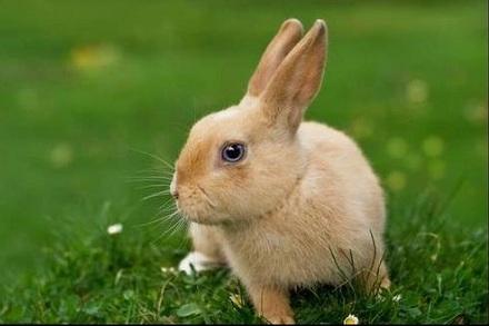 属兔人2021年全年运势完整版 今年属兔的财运和运气如何2021插图1