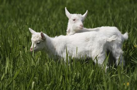 属羊人2021年全年运势完整版 今年属羊的财运和运气如何2021插图1