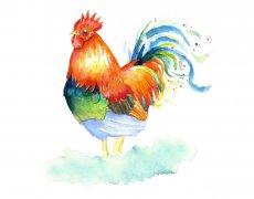小暑出生的属鸡人好命吗,命运和性格如何?