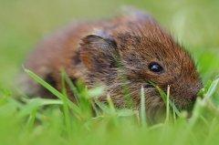 鼠的三合貴人是什么生肖?鼠年幾月出生最好?