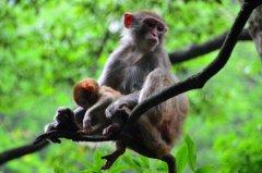 生肖猴的桃花貴人是什么生肖?生肖蛇