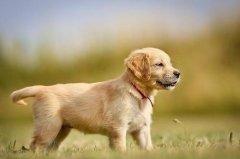 屬狗的人的文昌貴人是誰?是什么屬相?