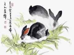 属兔人生命中的贵人是谁?哪些生肖是属兔人命中注定的贵人和小人?