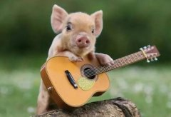屬豬人的桃花貴人是誰?什么生肖跟屬豬正桃花?