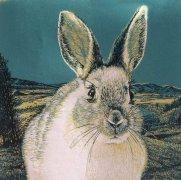 2020年屬兔的貴人是什么生肖?屬兔的2020年要提防哪個生肖?