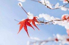 立冬節氣的由來,立冬南方吃湯圓嗎?