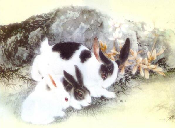 1975年屬兔的人2020年運勢及運程大全解析_華易算命網