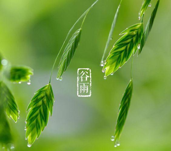 穀雨 意味